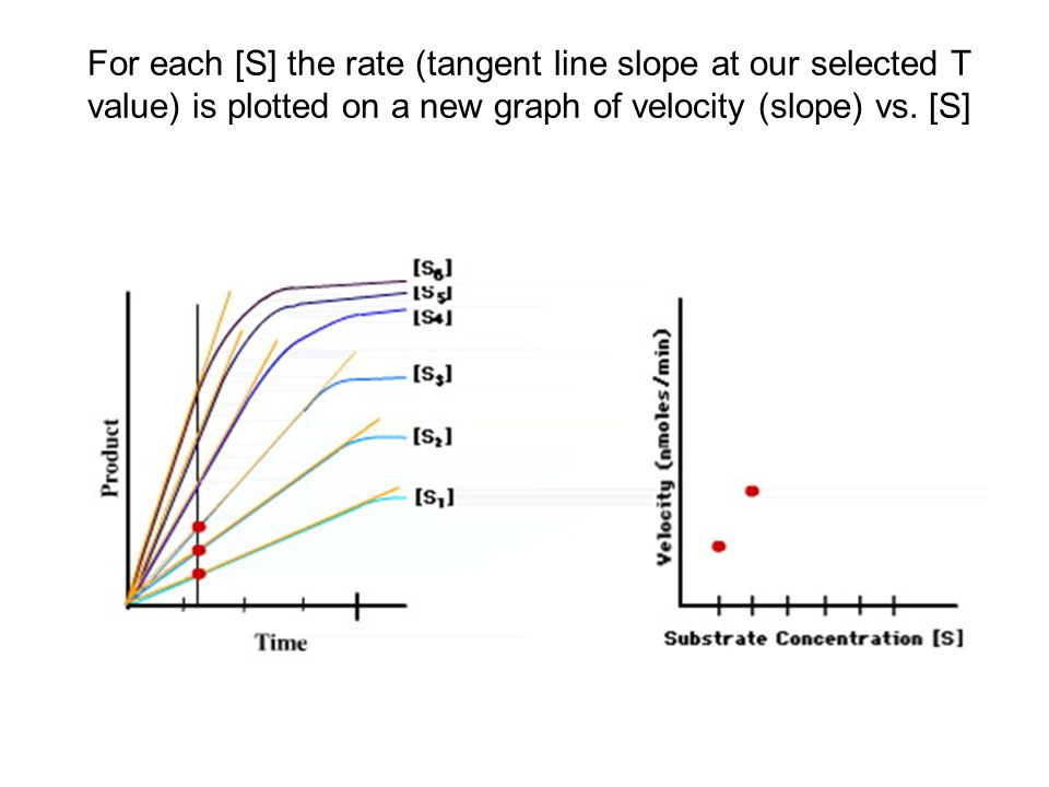 For each [S] the rate (tangent line slope at our selected T value) is plotted on a new graph of velocity (slope) vs.